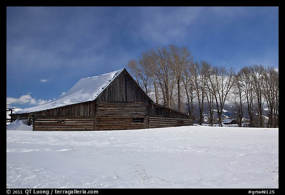 Wooden barn and cottonwoods in winter. Grand Teton National Park (color)