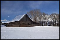 Wooden barn and cottonwoods in winter. Grand Teton National Park, Wyoming, USA. (color)