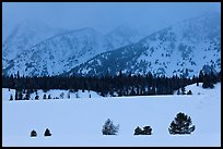 Trees, snowfield, and base of mountains at dusk. Grand Teton National Park, Wyoming, USA.