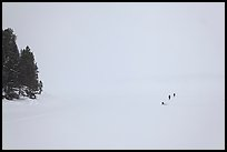 Frozen Jackson Lake in white-out, ice fishermen. Grand Teton National Park, Wyoming, USA.