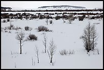 Winter landscape with bare trees and shrubs, Willow Flats. Grand Teton National Park, Wyoming, USA.