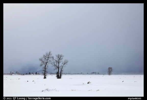 Bare cottonwood trees and storm sky in winter, Jackson Hole. Grand Teton National Park (color)