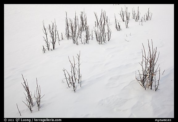 Shrubs and snowdrift patterns. Grand Teton National Park (color)