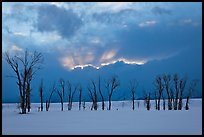 Winter sunset with snow and cottonwoods. Grand Teton National Park, Wyoming, USA. (color)
