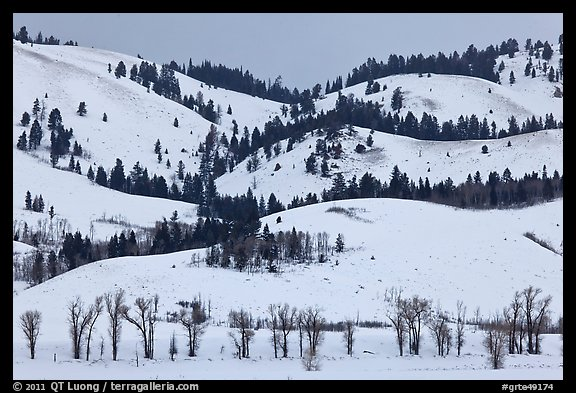 Hills and trees, Blacktail Butte in winter. Grand Teton National Park (color)