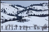 Hills and trees, Blacktail Butte in winter. Grand Teton National Park, Wyoming, USA.