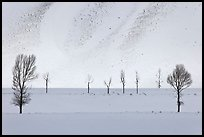 Bare trees and butte in winter. Grand Teton National Park, Wyoming, USA. (color)