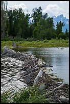 Beaver Dam near Schwabacher Landing. Grand Teton National Park ( color)