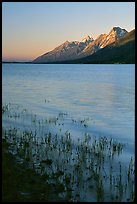 Teton range and Jackson Lake seen from Lizard Creek, sunrise. Grand Teton National Park, Wyoming, USA.
