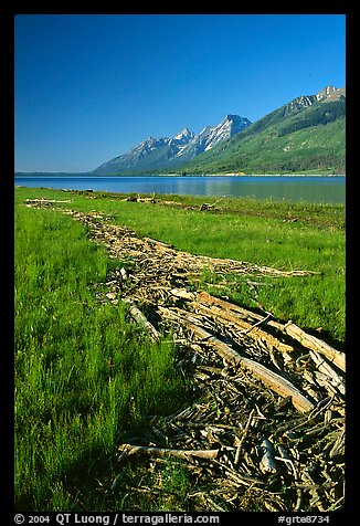 Debris marking high water limit for Jackson Lake, morning. Grand Teton National Park (color)