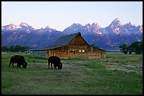 Bisons in front of barn below Teton range. Grand Teton National Park, Wyoming, USA.