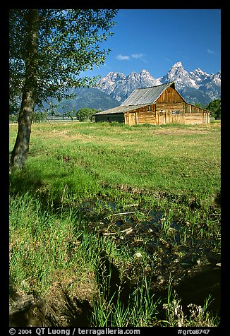 Pasture and historical barn at the base of mountain range. Grand Teton National Park (color)