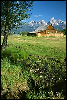 Pasture and historical barn at the base of mountain range. Grand Teton National Park, Wyoming, USA.