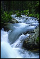 Cascade Creek flowing over rocks. Grand Teton National Park, Wyoming, USA.