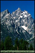 Rocky peaks of Cathedral group, morning. Grand Teton National Park, Wyoming, USA. (color)