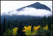 Fog, trees, and peak, Glacier basin. Rocky Mountain National Park, Colorado, USA.