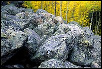 Field of large lichen-covered boulders and  aspens in fall foliage. Rocky Mountain National Park, Colorado, USA.