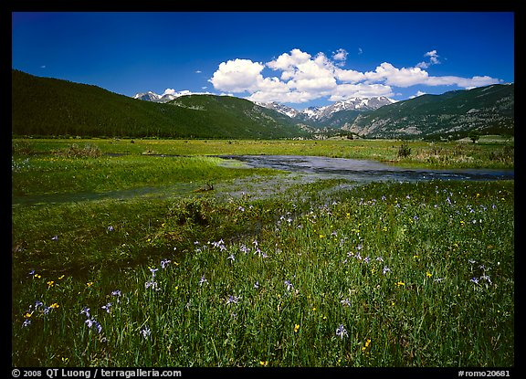 Summer flowers and stream in Many Parks area. Rocky Mountain National Park (color)