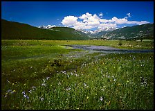Summer flowers and stream in Many Parks area. Rocky Mountain National Park, Colorado, USA.