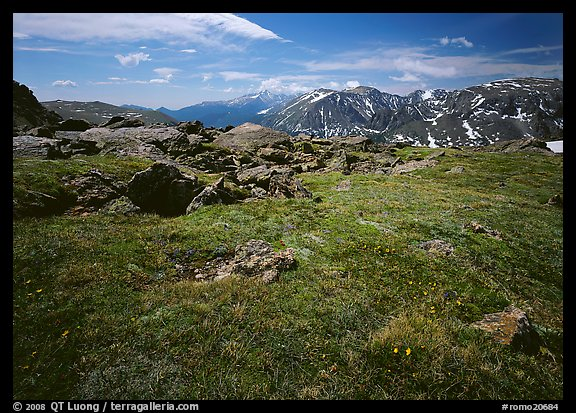 Alpine tundra near Trail Ridge Road in summer. Rocky Mountain National Park (color)