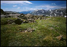 Alpine tundra near Trail Ridge Road in summer. Rocky Mountain National Park, Colorado, USA.
