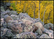 Lichen-covered boulders and yellow aspens. Rocky Mountain National Park, Colorado, USA.