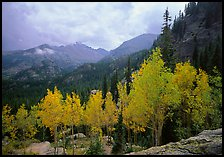 Aspens in fall foliage and Glacier basin mountains. Rocky Mountain National Park, Colorado, USA.