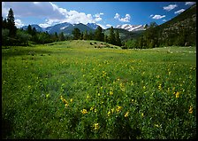 Wildflowers in meadow. Rocky Mountain National Park ( color)