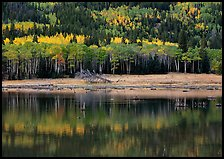 Mixed trees and  reflections. Rocky Mountain National Park, Colorado, USA.