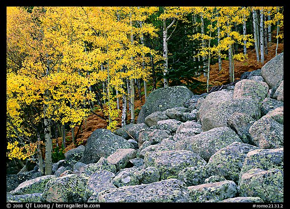 Boulders and aspens with yellow leaves. Rocky Mountain National Park, Colorado, USA.