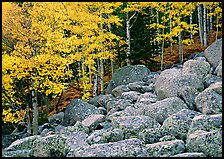 Boulders and aspens with yellow leaves. Rocky Mountain National Park ( color)