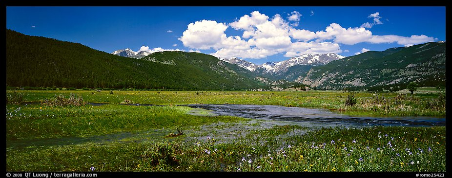 Summer wildflowers and stream in mountain meadow. Rocky Mountain National Park, Colorado, USA.