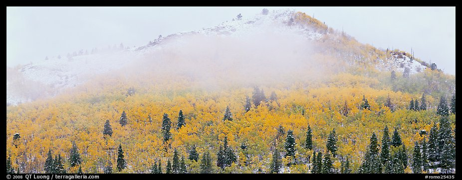 Forest with fall colors and early snow beneath fog-shrouded peak. Rocky Mountain National Park (color)