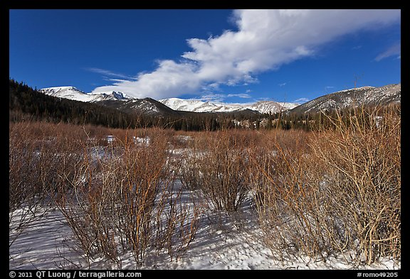 Willows near beaver pond in winter. Rocky Mountain National Park (color)