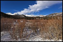 Willows near beaver pond in winter. Rocky Mountain National Park, Colorado, USA. (color)