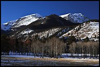 Aspens and Bighorn mountain in winter. Rocky Mountain National Park ( color)