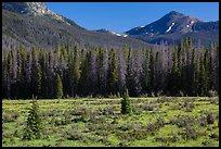Meadow in Kawuneeche Valley. Rocky Mountain National Park ( color)