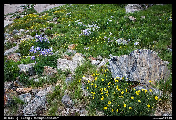 Wildflowers and boulders. Rocky Mountain National Park (color)