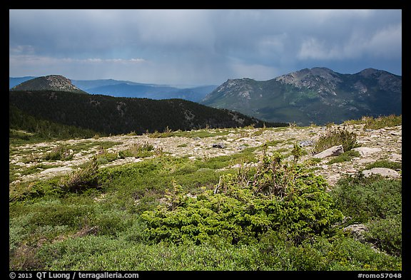 Bands of krummholz. Rocky Mountain National Park (color)