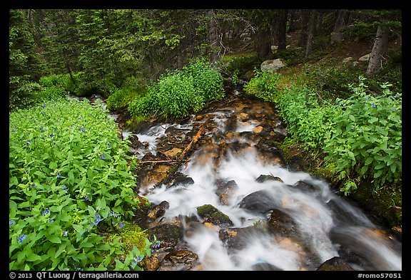 Stream cascading in forest. Rocky Mountain National Park (color)