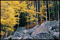 Boulders and yellow aspens. Rocky Mountain National Park, Colorado, USA.