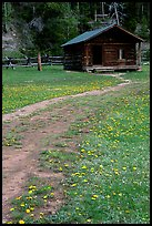 Meadow with flowers and historic cabin, Never Summer Ranch. Rocky Mountain National Park, Colorado, USA. (color)