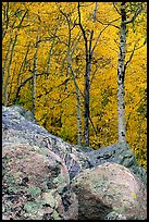 Boulder field and yellow aspens. Rocky Mountain National Park, Colorado, USA.