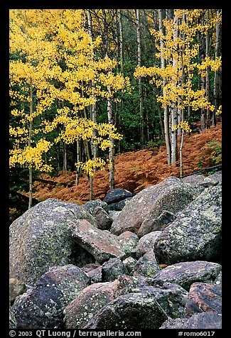 Boulders and forest with yellow aspens. Rocky Mountain National Park, Colorado, USA.