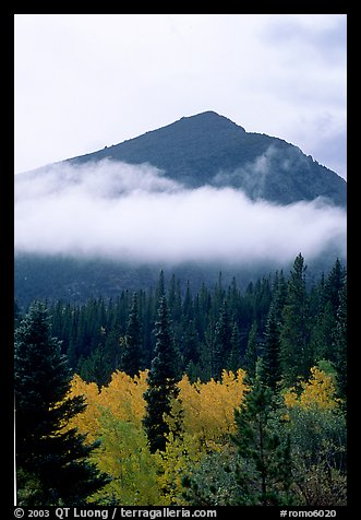 Trees, Fog, and Peak, Glacier Basin. Rocky Mountain National Park (color)