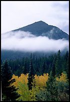 Trees, Fog, and Peak, Glacier Basin. Rocky Mountain National Park, Colorado, USA. (color)