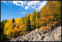 Brightly colored aspens and boulders in autumn. Rocky Mountain National Park ( color)