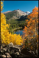 Yellow and orange aspens framing Bear Lake and Longs Peak. Rocky Mountain National Park ( color)