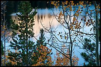 Bear Lake through trees and autumn leaves. Rocky Mountain National Park ( color)