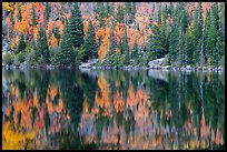 Autumn foliage color and reflections in Bear Lake. Rocky Mountain National Park ( color)